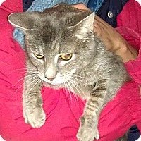 Adopt A Pet :: Sid - Fairfield, CT