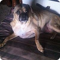 Adopt A Pet :: Wilbur - San Francisco, CA