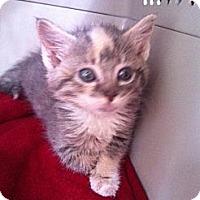 Adopt A Pet :: Loolu - Jeffersonville, IN