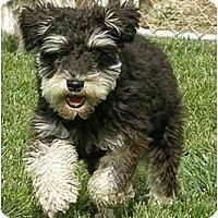 Adopt A Pet :: Henery - Meridian, ID