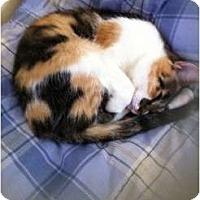 Adopt A Pet :: Morgan - Pittstown, NJ