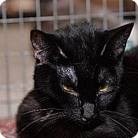 Adopt A Pet :: Midnight - Redwood City, CA