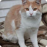 Adopt A Pet :: Todd - Red Deer, AB