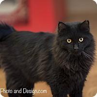 Adopt A Pet :: Homer - Fountain Hills, AZ
