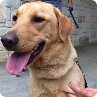 Adopt A Pet :: Abby - Wimberley, TX