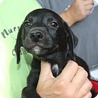 Adopt A Pet :: Regis - Marion, AR