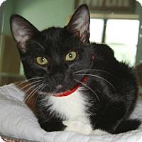 Adopt A Pet :: Victoria - Englewood, FL