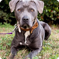 Adopt A Pet :: CeCe - Savannah, GA