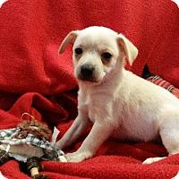 Adopt A Pet :: Airbud - Vacaville, CA