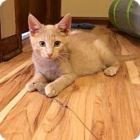 Adopt A Pet :: Scooby - Colmar, PA