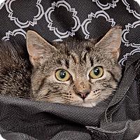 Adopt A Pet :: Lila - Wilmington, DE