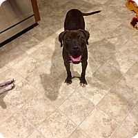 Adopt A Pet :: Lizzy - Jacksonville, NC