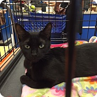 Adopt A Pet :: Zena - Brandon, FL