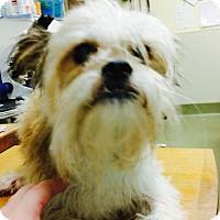 Adopt A Pet :: Charlie - Goodlettsville, TN