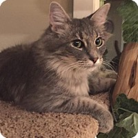 Adopt A Pet :: Jetta - Springfield, OR