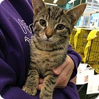 Adopt A Pet :: Paul - Richmond, VA