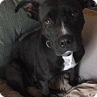 Adopt A Pet :: Rory* - Tampa, FL