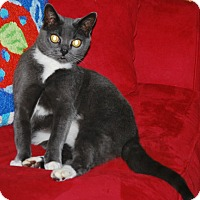 Adopt A Pet :: Sabrina - Putnam Hall, FL