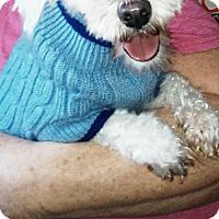 Adopt A Pet :: Frankie - Northumberland, ON