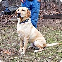 Adopt A Pet :: Buddy - New Oxford, PA