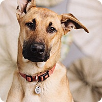 Adopt A Pet :: Anthony - Portland, OR