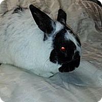 Adopt A Pet :: Michael Bunny - Conshohocken, PA