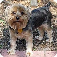 Adopt A Pet :: Teddy - Leesburg, FL