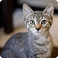 Adopt A Pet :: Princess - Chicago, IL