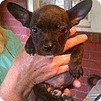 Adopt A Pet :: Zip - Providence, RI