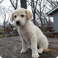 Adopt A Pet :: Winter - Adopted! - Ascutney, VT