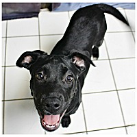 Adopt A Pet :: Yingling - Forked River, NJ