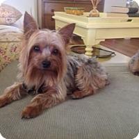 Adopt A Pet :: Austin - Conroe, TX