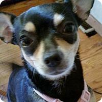 Adopt A Pet :: Jazmyn - Elkhart, IN