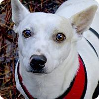 Adopt A Pet :: Charlie ADOPTION PENDING - Sacramento, CA