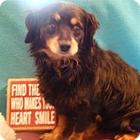 Adopt A Pet :: Koby - Vacaville, CA