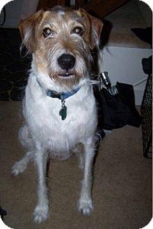 Terrier (Unknown Type, Medium)/Hound (Unknown Type) Mix Dog for adoption in Lovingston, Virginia - George (COURTESY 7-11-16)