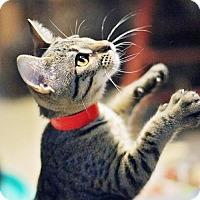 Adopt A Pet :: Priya - Markham, ON