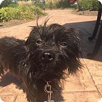 Rat Terrier Mix Dog for adoption in St John, Indiana - Bert