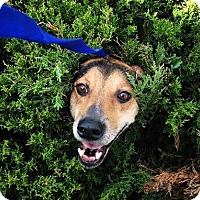 Adopt A Pet :: Bessie~meet me! - Glastonbury, CT