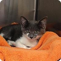 Adopt A Pet :: Fran - East Brunswick, NJ