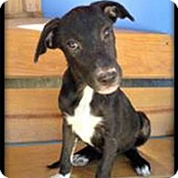 Adopt A Pet :: Isadore - Cincinnati, OH