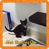 Adopt A Pet :: jack skellington - Bryan, OH