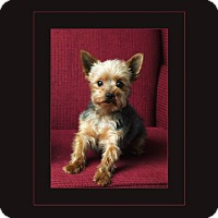 Adopt A Pet :: Milo - Hadley, MI