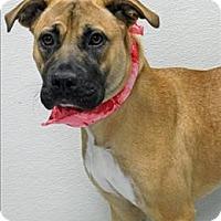 Adopt A Pet :: Scarlet - Topeka, KS