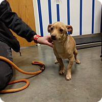 Adopt A Pet :: Mary Jane - Ottawa, KS