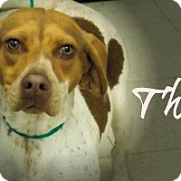 Adopt A Pet :: Thea - Defiance, OH