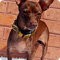 Adopt A Pet :: Nora - Bridgeton, MO