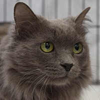 Adopt A Pet :: Nellie - Mountain View, CA