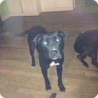 Adopt A Pet :: Isabelle - Rocky Mount, NC