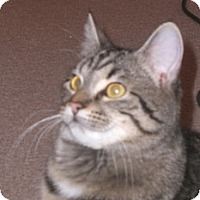 Adopt A Pet :: Ruby - Stafford, VA